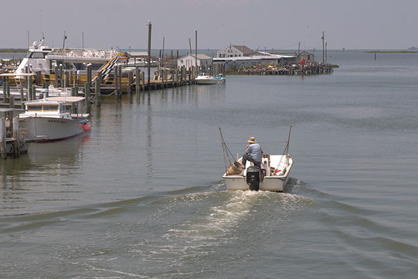 The Chesapeake's Shrinking Isle