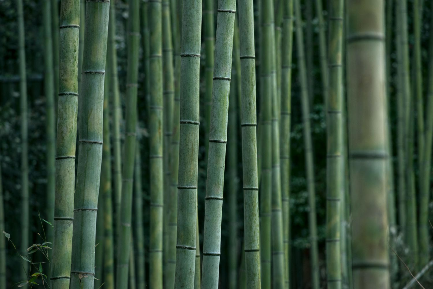 Bamboo - A Sustainable, Biodegradable Alternative