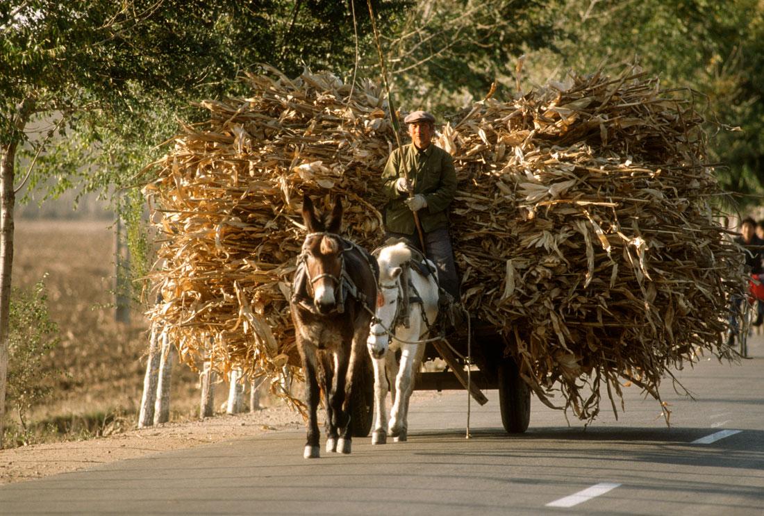 Farmer at Harvest Time